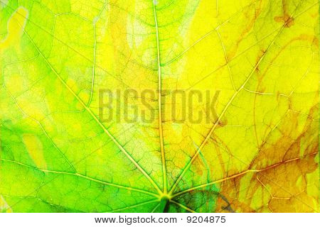 Texture of a Leaf