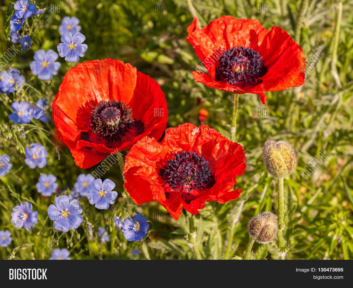 Flower Bed Blooming Image Photo Free Trial Bigstock