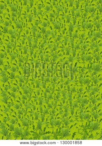 Fresh green oak leaves background in spring