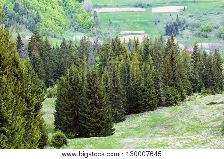 landscape consist of green grassy valley on a foreground and row of green fir-trees with hills on a background