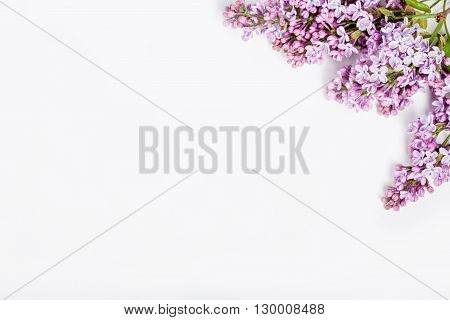 Lilac flowers on white background from the top
