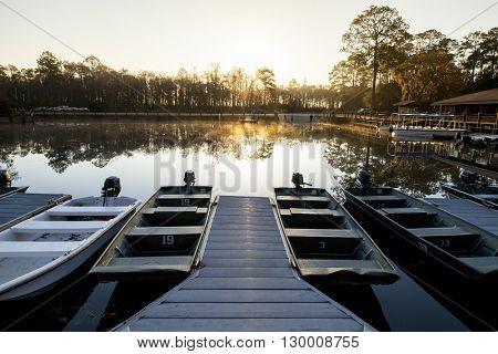 dawn in the Okefenokee swamp,