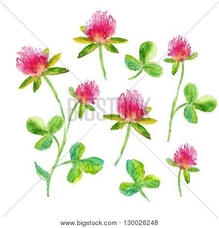 Set of watercolor flowers. Hand drawn clover flower on a sterm with leaves for romantic background card or decoration