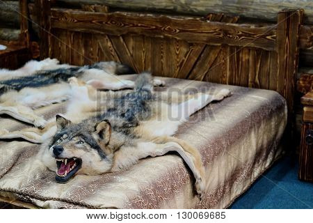Wolf fell as a bedcover
