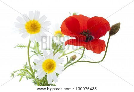 Simple Posy Of Poppy And Garland Chrysanthemums