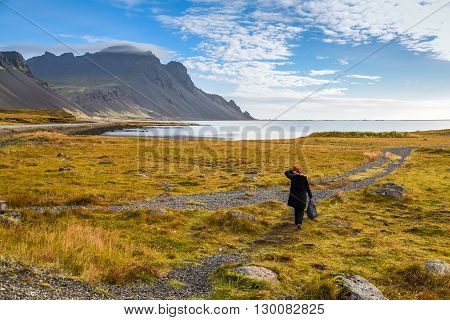 Woman traveler walk among beautiful yellow field sea and mountain landscape in autumn of iceland - can use for joy travel or relax vacation concept