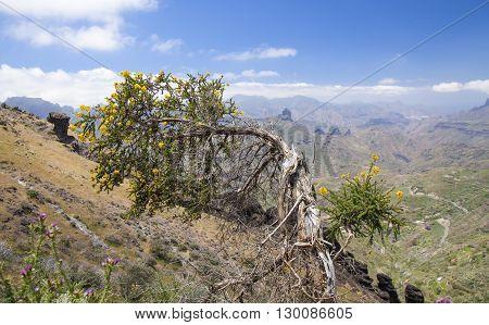 Gran Canaria, Central Mountains
