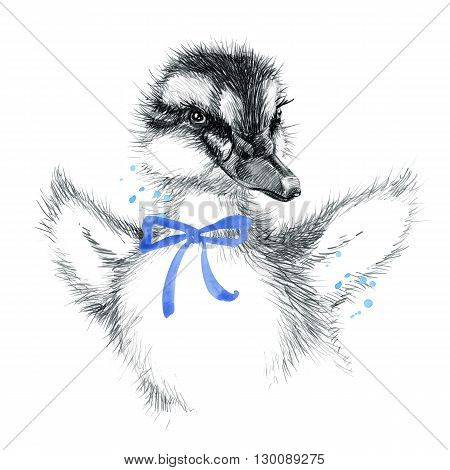 Cute Duckling. duckling pencil sketch illustration. T-shirt print with cute duckling. Poster for kid. Greeting card.
