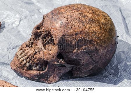 exhumation of human bone remains for identification.