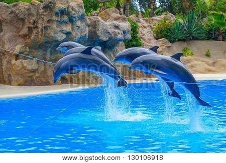 Beautiful dolphins jumping above a rope in a dolphinarium