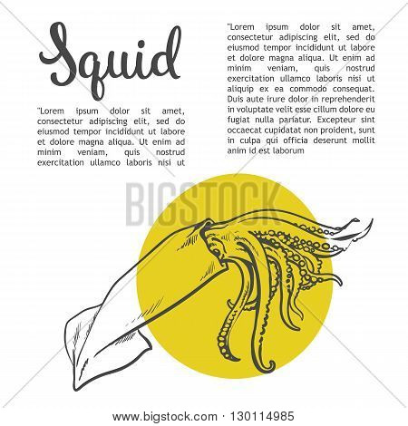 Sketch squid, illustration drawn by hand on a white background, isolated squid, sea food concept for the menu, advertising, sales brochures with information inscription lettering Squid