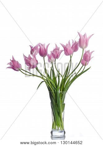 Beautiful Pink Tulips Isolated On White Background