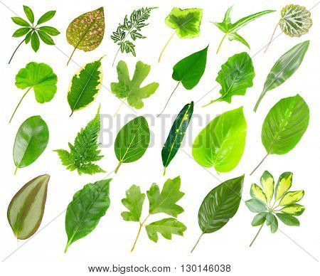 Collection of house plants leaves, isolated on white