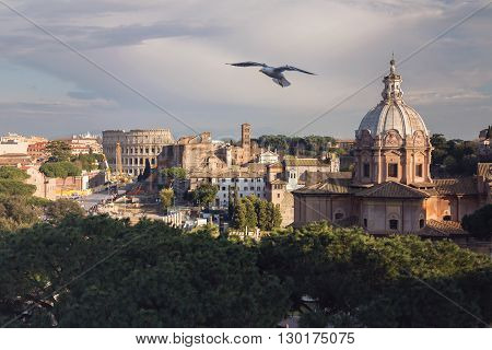 View of the historical center of Rome and of the Colosseum, on a sunny spring day. Flying seagull out of focus