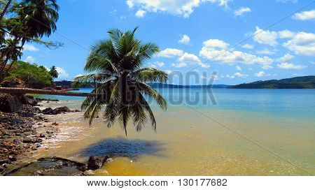 Seascape with an inclined palm tree on a tropical island, Ross Island, Andaman and Nicobar Islands, India, Asia.