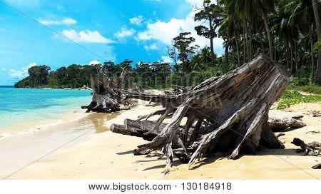 Uprooted trees at Wandoor Beach as a result of 2004 Indian Ocean Tsunami, Port Blair, Andaman and Nicobar Islands, India, Asia.