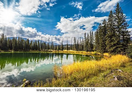 Sunny autumn day in Jasper National Park  in Canada. The small superficial lake is surrounded with coniferous forest and turned yellow bush