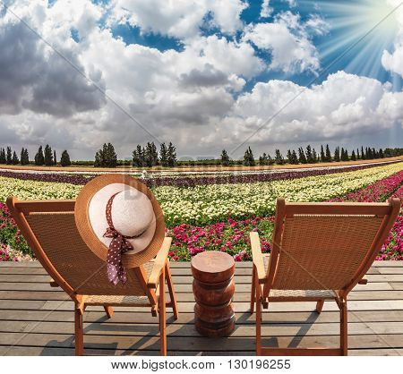 Flower kibbutz near Gaza Strip. Spring flowering buttercups. Two chaise-longue and table standing on wooden platform