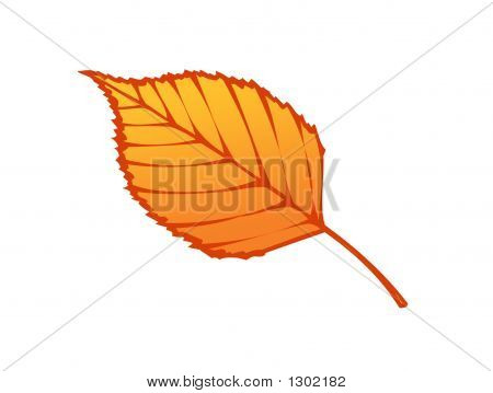 Red Leaf Illustration