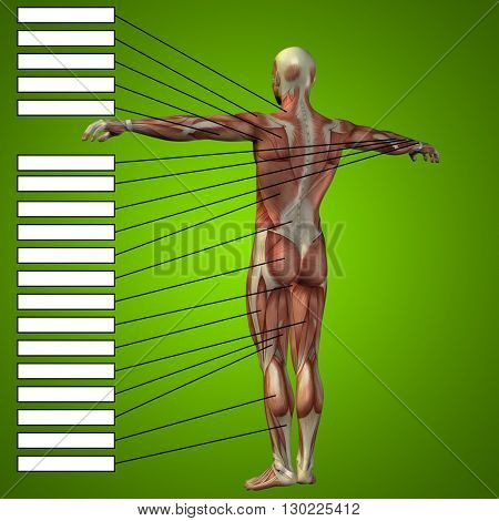 3D illustration of concept or conceptual male or human anatomy, a man with muscles and textbox on green gradient background