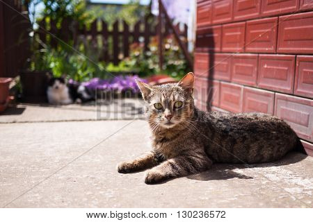 Brown cat resting on the sidewalk next to the building
