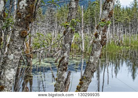 Glacier lake in Juneau Alaska panorama landscape
