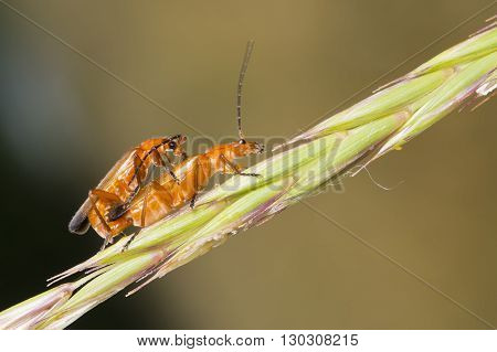 Couple Of Cricket Having Sex On A Spike