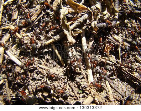 ants in the anthill are many working individuals