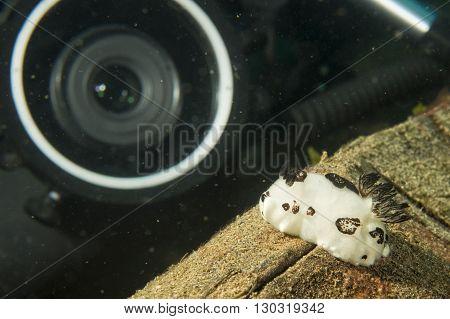 Underwater Photographer Gear Near White Nudibranch
