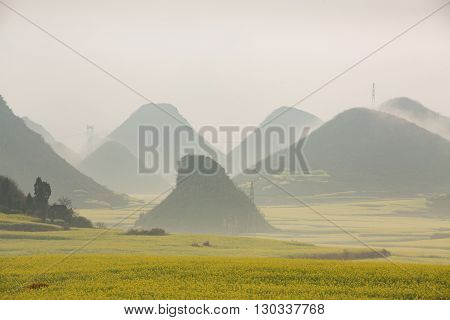 Yellow rapeseed flower field with the mist in Luoping, China
