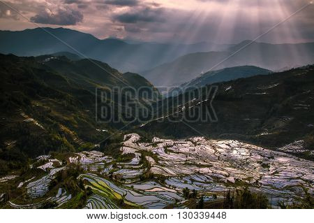 Terraced rice fields in water season of Hani ethnic people in Yunnan province, China