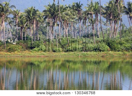 Coconut trees and reflection in southern India state Andhra pradesh