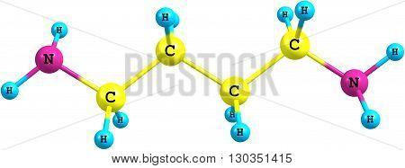 Putrescine - tetramethylenediamine - is a foul-smelling organic chemical compound - butanediamine - that is related to cadaverine. 3d illustration