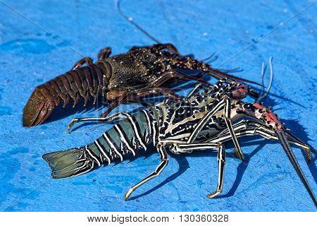 Fresh Lobster In Fishing Boat