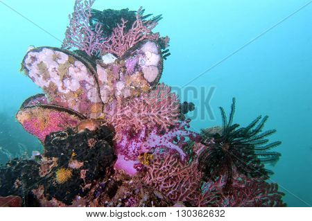 Colorful Underwater Landscape With Corals