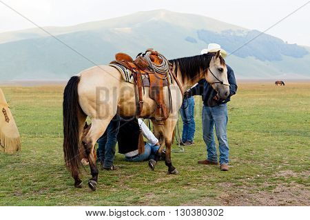Saddled horse Leather vintage saddle with steel stirrups. Meadow, a plateau among the mountains of Italy. Castelluccio.