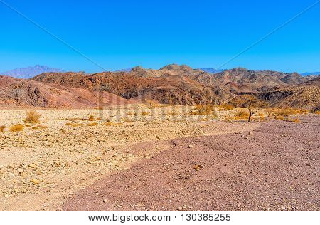 The walk along the dry riverbed in Negev desert Eilat Israel.