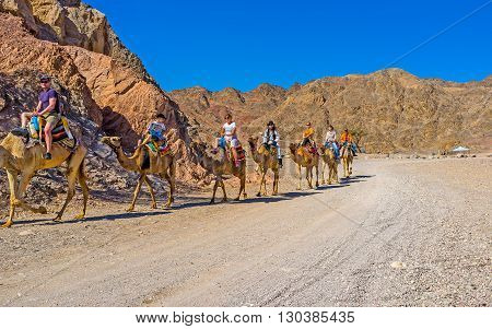 EILAT ISRAEL - FEBRUARY 24 2016: The tourists on camel safari in Masiv Eilat Nature Reserve among the rocky mountains on February 24 in Eilat.