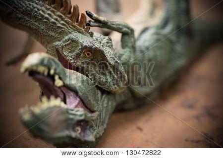 an allosaurus biting a tyrannosaurus horizontal composition