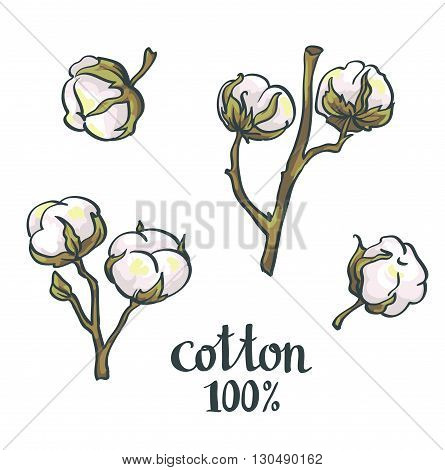 Natural Cotton. Hand-drawn isolated vector obects set.