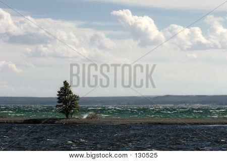 Tree Between