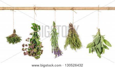 Herbs hanging isolated on white background. Fresh sage thyme oregano marjoram lavender