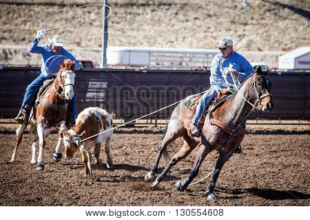 Wickenburg, USA - February 5, 2013: Riders compete in a team roping competition in Wickenburg, Arizona, USA