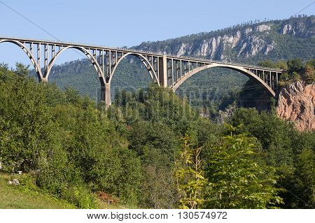 Durdevica arched Tara Bridge over green Tara Canyon. Zabljak Montenegro.