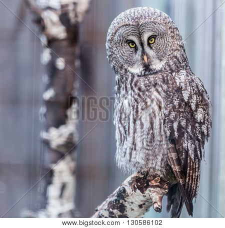 close up of gray owl on a tree