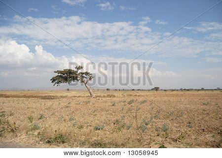 ethiopian nature