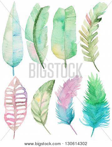 Watercolor set with tropical palms leaves. Palm leaves elements for your design. Collection Palm leaves