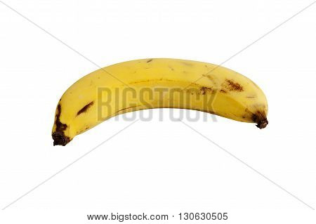Cavendish Banana Fruit. isolated on white background with clipping paths.