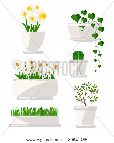 Illustration of houseplants. Cacti set succulents home flowers houseplant in pot. Set of houseplant.