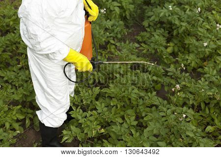 Pesticide spraying. Vegetables spraying with pesticides in a garden